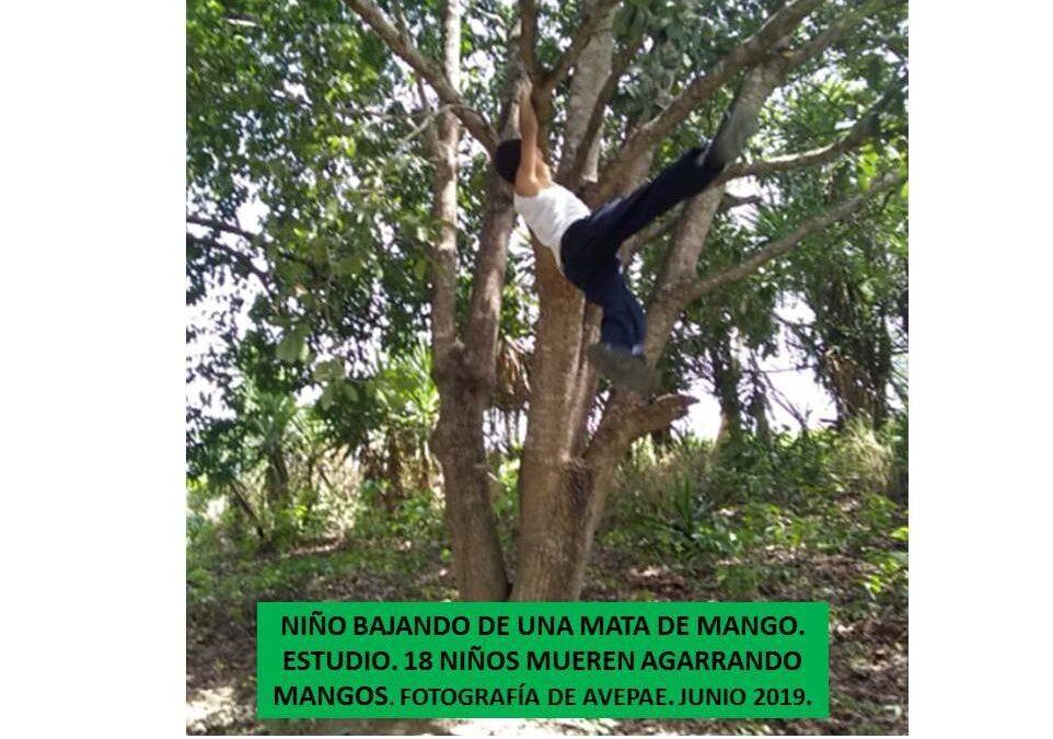 Actualizando. Investigación. 24 Niños y 43 Jóvenes y Adultos Mueren al Caer de Árboles Frutales (Mangos) 2016 – 2020 Venezuela /                           Última  18 NIÑOS MUEREN AL CAERSE DE ÁRBOLES FRUTALES 2016  Mayo 2019.  AVEPAE AC  ONG. Por Kenett Agar.